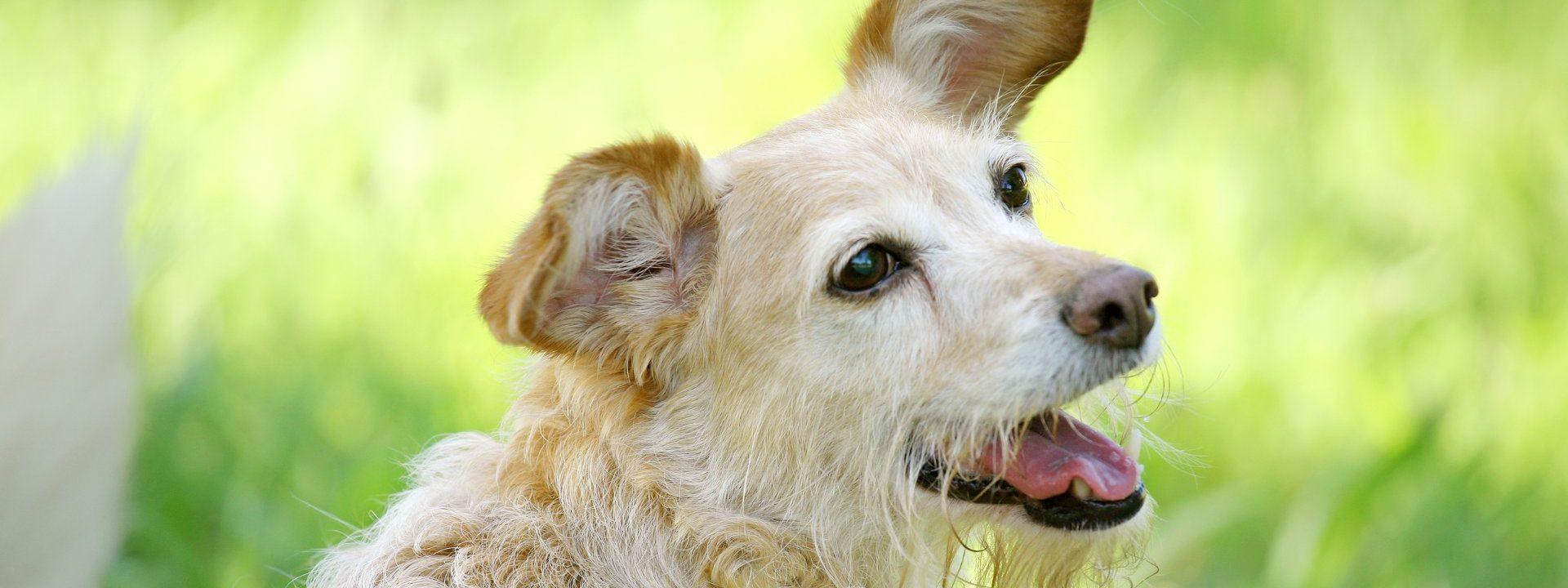 hundetraining-ablauf