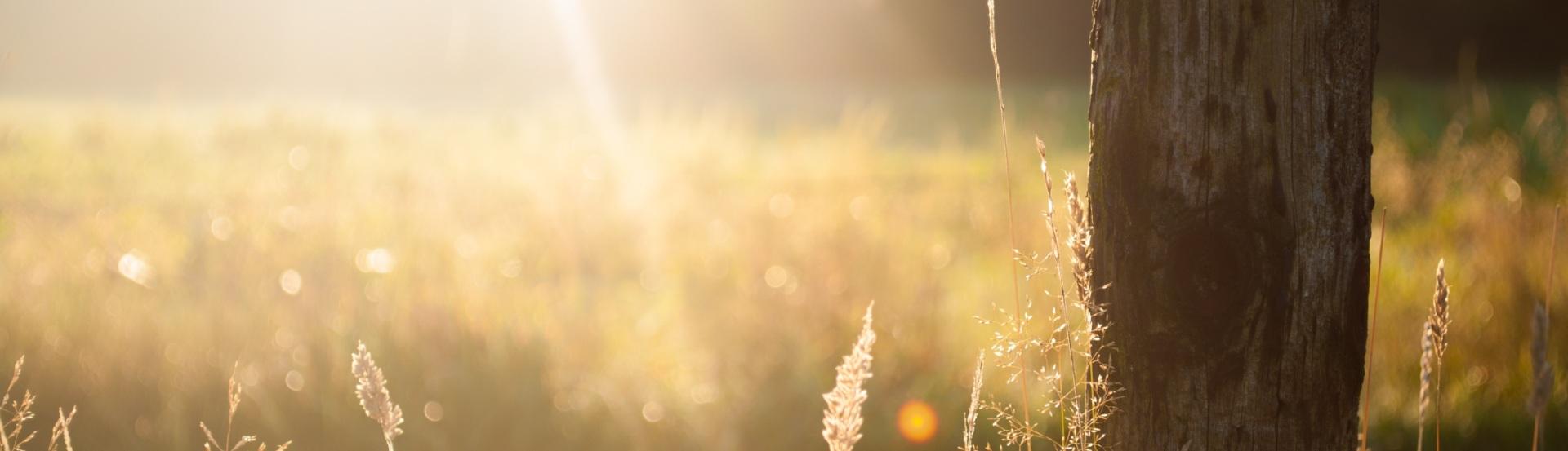 sun-trees_bearb