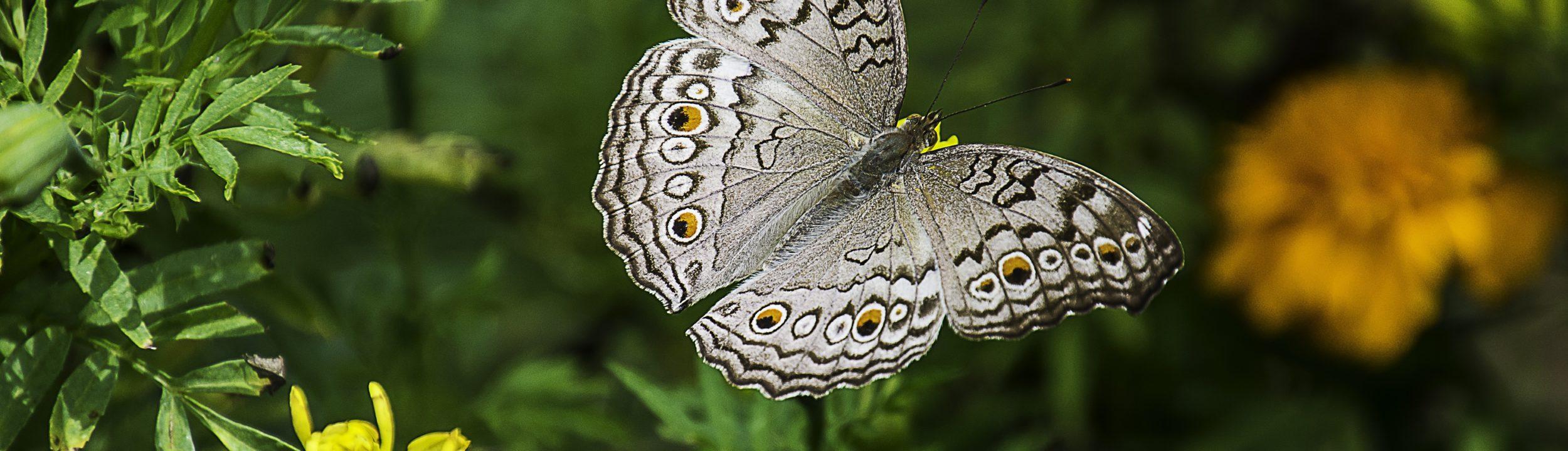 butterfly-1644189